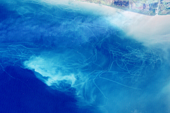 Mudtrails from Fishing Trawlers in Gulf of Mexico - related image preview