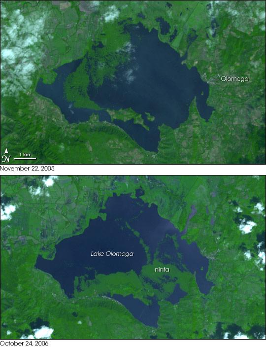 Aquatic Plants Choke Lake Olomega