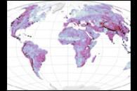 Global Landslide Risks