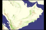 Locusts on the Arabian Peninsula