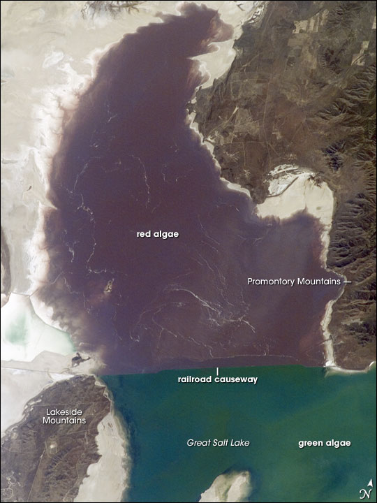 Algae in Great Salt Lake