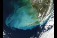 Resuspended bottom sediments off Florida