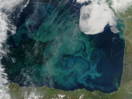 Phytoplankton bloom in the Bay of Biscay - selected image
