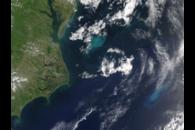 Phytoplankton Bloom off the US East Coast