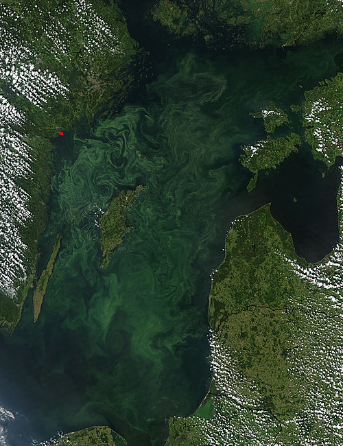 Summer Bloom in the Baltic Sea - related image preview