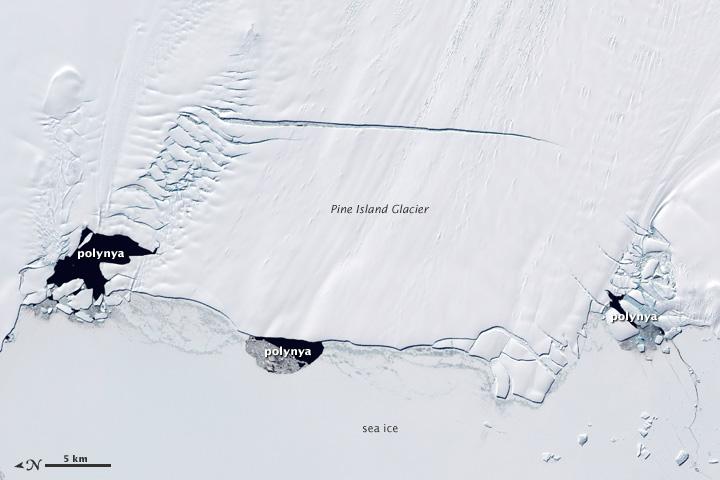 Polynyas and the Pine Island Glacier, Antarctica