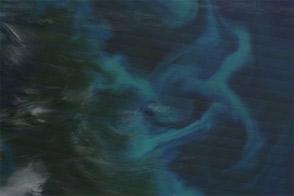Phytoplankton around the Falkland Islands