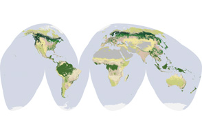 Global Land Cover Classification - selected image