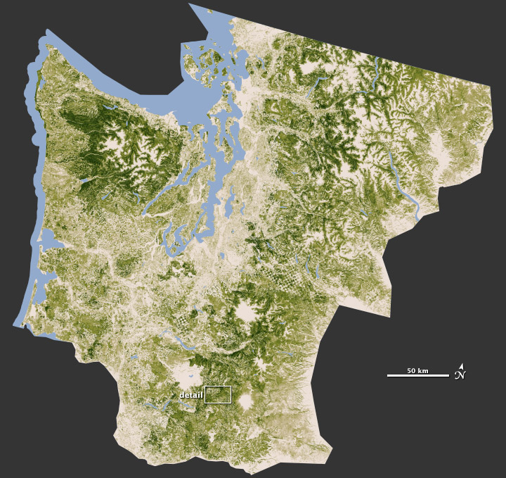 Closeup on Forests of the Pacific Northwest
