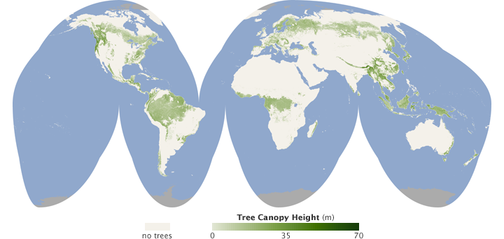 Forest Canopy Height - related image preview