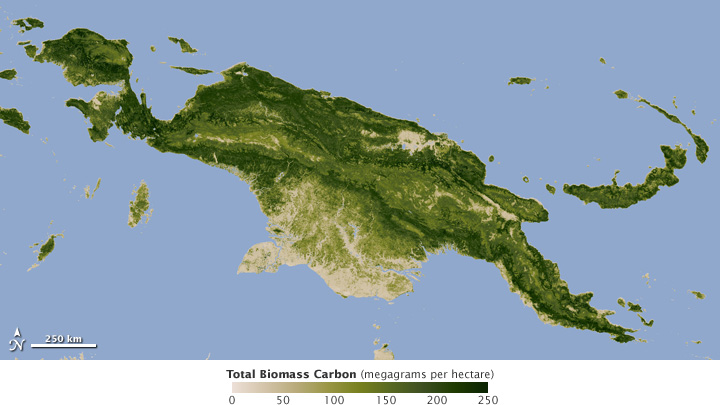 Total Carbon Biomass - related image preview