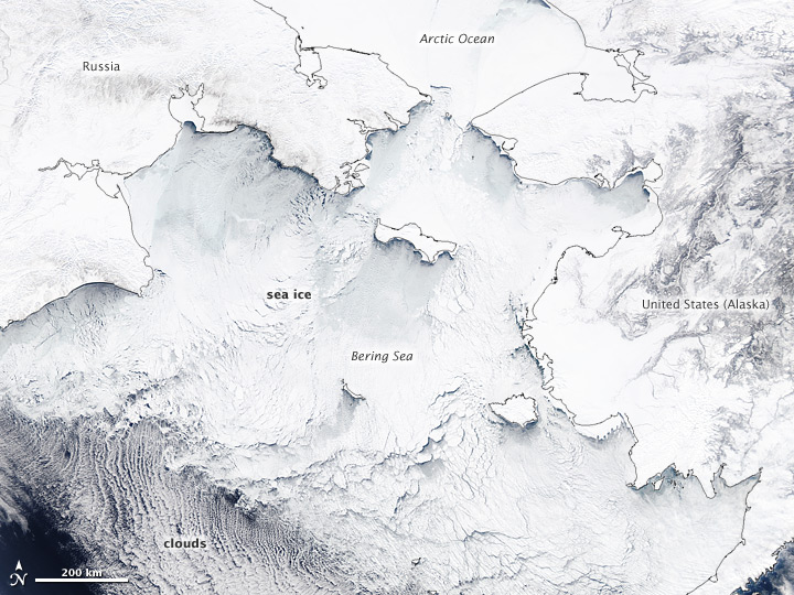 Bering Sea Teeming with Ice