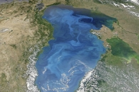 Carbon Eaters on the Black Sea