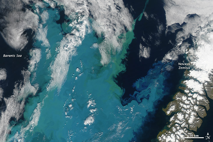 A Bloom in the Barents Sea - related image preview