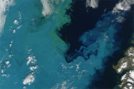 A Bloom in the Barents Sea