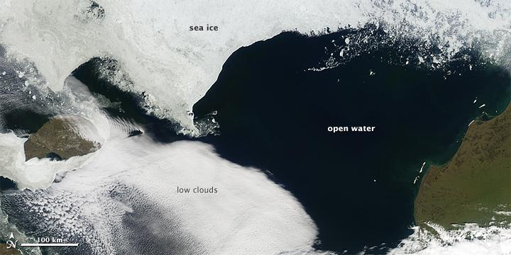 Sea Ice Skylights Spur Phytoplankton Blooms