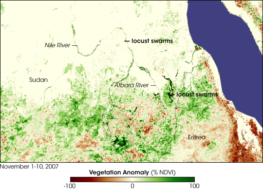 Lush Vegetation Fuels Locust Outbreak in Sudan - related image preview