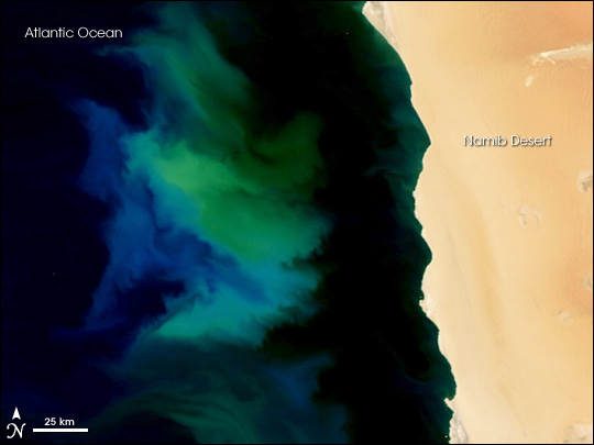 Phytoplankton Bloom off Namibia