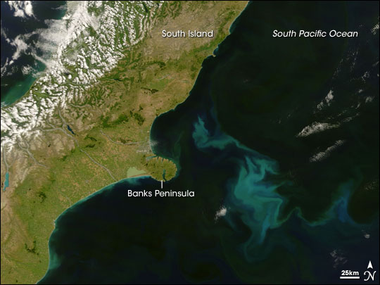 Phytoplankton Bloom off New Zealand