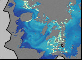 Algae Bloom in Antarctic Sea Ice