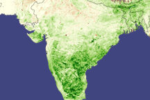 Monsoon Spurs Indian Green-up - selected image