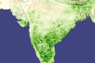 Monsoon Spurs Indian Green-up