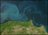 Black Sea Phytoplankton Bloom