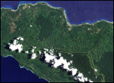 Forest Change on New Ireland, Papua New Guinea - selected image
