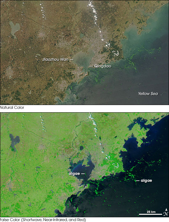 Algal Bloom Along the Coast of China