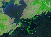 Algal Bloom Along the Coast of China