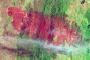 Burn Scar from the Yarrabin Fire in New South Wales