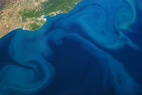 Plankton Bloom, Black Sea : Image of the Day