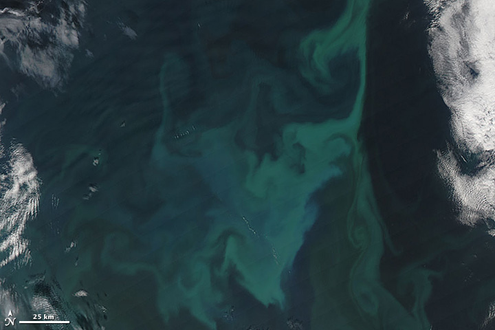 Iceland Sea in Bloom