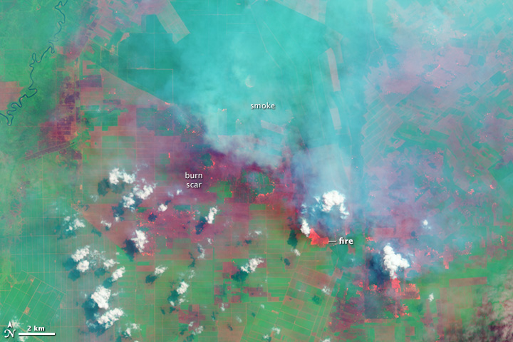 Fires and Farms in Indonesia