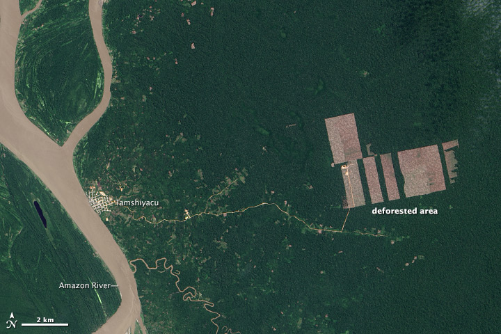 Landsat 8 Detects New Deforestation in Peru