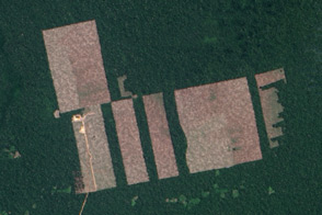 Landsat 8 Detects New Deforestation in Peru - selected image
