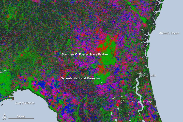 New Map Yields Better View of Forest Changes - related image preview