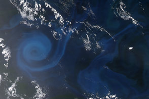 Spiral of Plankton : Image of the Day