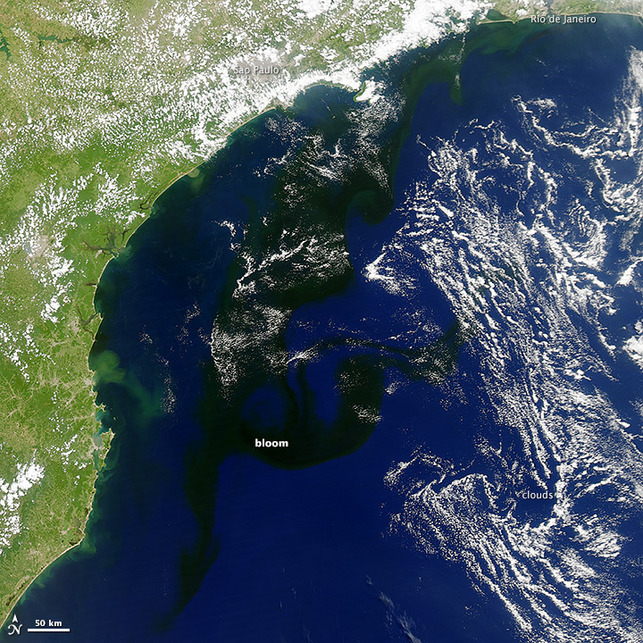 A Dark Bloom in the South Atlantic