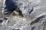 Ash, Steam, and Snow at Karymsky Volcano