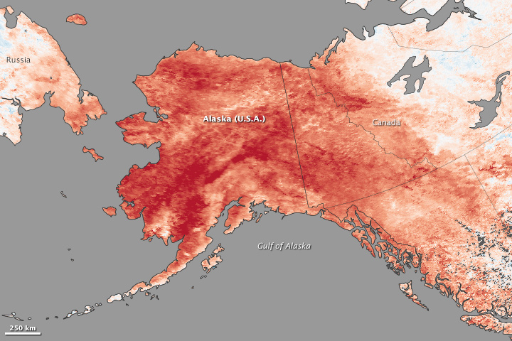 Winter Heat Swamps Alaska Image Of The Day - Heat map us with alaska
