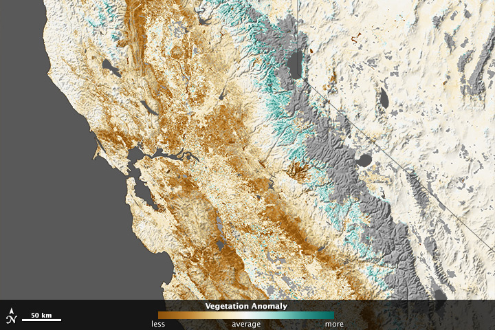 Drought Stressing California's Plantscape - related image preview
