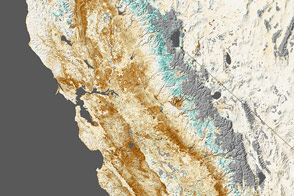 Drought Stressing California's Plantscape - selected image