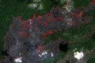Kilauea Lava Chews Through More Forest