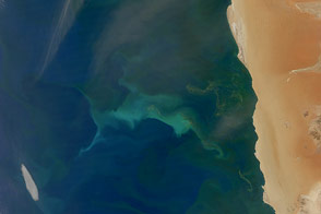 Plankton and Sulfur in the Benguela Current