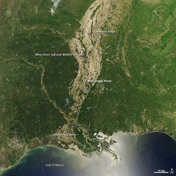 Forests of the Mississippi Alluvial Plain