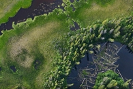 A Closer Look at Alaska's Forests