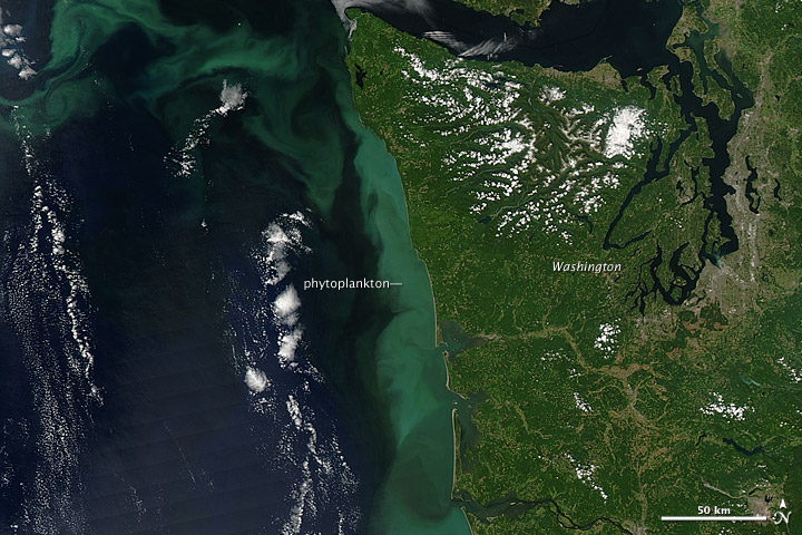 Phytoplankton Bloom off the Pacific Northwest - related image preview