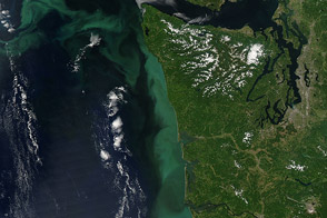 Phytoplankton Bloom off the Pacific Northwest - selected image