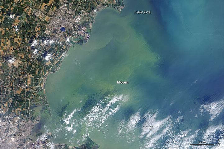 2014 Harmful Algal Bloom near Toledo, Ohio